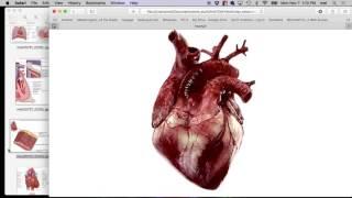 Fall 2016, Heart Anatomy 2