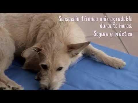 Cojín Enfriador para Mascotas de TK-Pet - Tiendanimal
