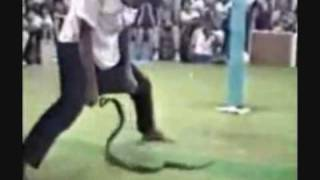 a funny funny funny funny funny funny funny animal videos