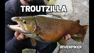Troutzilla ( video 201)
