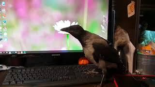 Актуальное о птенцах диких птиц. Что делать, если вы нашли птенца