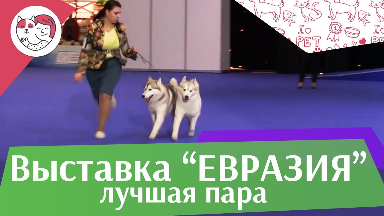 Best in show Лучшая пара 18 марта на Евразии 17 ilikepet
