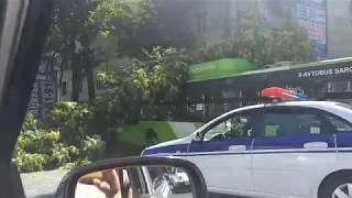 Пассажирский автобус в Ташкенте врезался в дерево: есть пострадавшие
