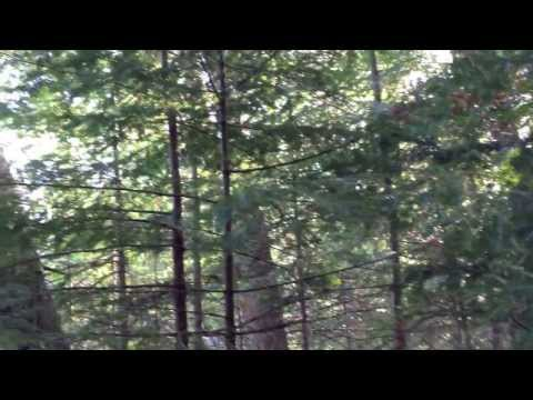 Static in Verona - Rosemary (Bury Me) Live in the Woods