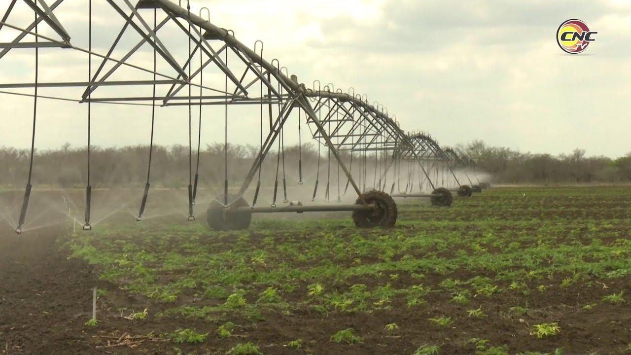 Beneficia Proyecto de desarrollo rural cooperativo producciones de granos en el oriente de Cuba