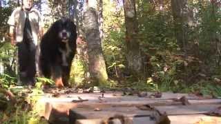 Parc des Appalaches - La vraie aventure nature