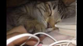 捨て猫がなつくまで an Abandoned Cat Comes To My Place