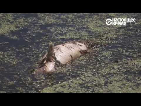 Чиновники об умирающей реке Остер – очистится сама