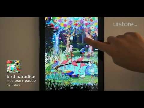 Video of bird paradise LiveWallpaper