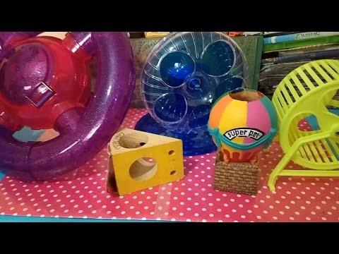 Nuevos juguetes para mi Hamster Intercambio con Griss Smile