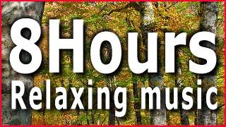 8Hours Relaxing music01 Acoustic Guitar Sleep,Study,Meditation,Reiki,Zen,Yoga