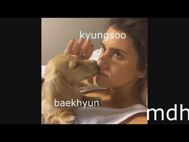 EXO AS VINES     try not to laugh