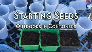Starting Seeds Outdoors in Containers