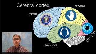 Paul Andersen explains the structures and functions of the brain