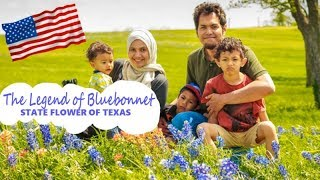 The Legend of Bluebonnet State flower of Texas
