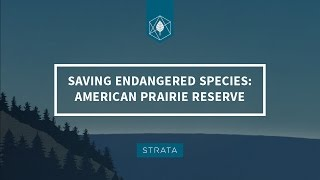 Saving Endangered Species: The American Prairie Reserve