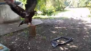 08.07.18 Орланчик уничтожил стульчик:))) Есть ИДЕЯ!!!:)