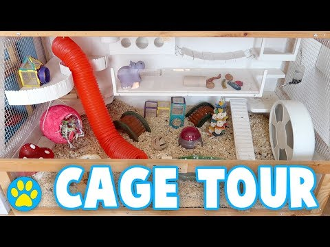 Colourful Hamster Cage Tour | Iodine
