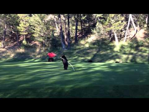 Bjørneunge slo seg løs på golfbanen