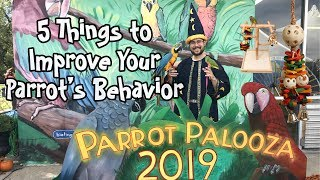 5 Things You Can Do to Improve Your Parrot's Behavior