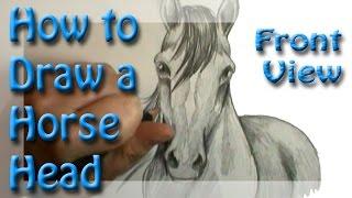 Смотреть онлайн Делаем рисунок: голова лошади смотрит прямо