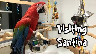 A Visit with Santina - Green Winged Macaw