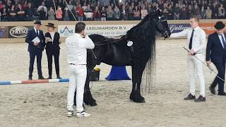 King👑 Of The Stallions! JASPER 366. The One And Only 😍 Friesian Horse