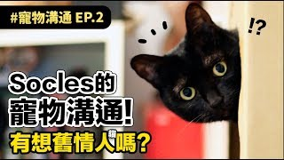 【Socles的寵物溝通!有想舊情人嗎?】志銘與狸貓