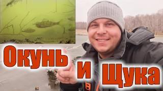 Диалоги о рыбалке рыбалка на камере