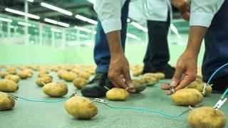 Смотреть онлайн Научный эксперимент: зажигаем лампочку от картошки