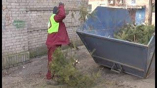 Вторая жизнь новогодних елок