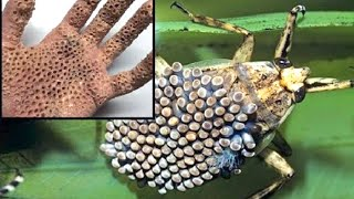 15 Dangerous Animals You Should Never Touch