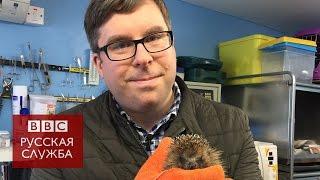 #Londonблог: кто спасает диких животных, попавших в беду?