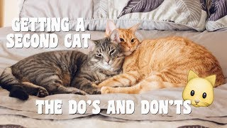 TIPS ON BRINGING A SECOND CAT INTO YOUR HOME