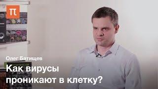Биофизика вирусов — Олег Батищев