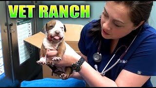 Broken Jaw Puppy Rescued