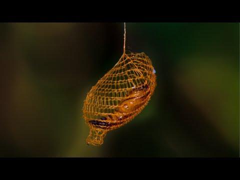 Přírodní 3D tiskárna: kokon v Amazonském pralese