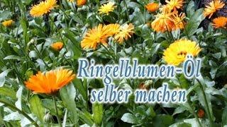 Ringelblumenöl (Calendula officinalis) selber machen
