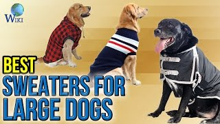 7 Best Sweaters For Large Dogs 2017