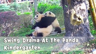 Swing Drama At The Panda Kindergarten | iPanda