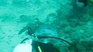 preview picture of video 'immersioni mafia island - big blu'