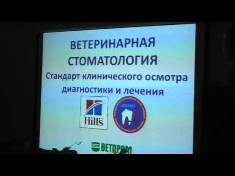 Ветеринарная стоматология_обзорная_начало