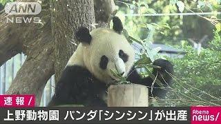 上野動物園のパンダ「シンシン」が出産東京都17/06/12