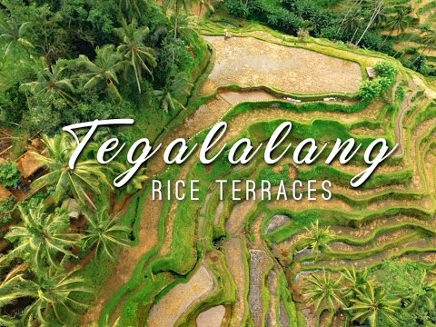 Tegalalang Rice Terraces || BALI DRONE TRAVEL VLOG || Ubud, Indonesia