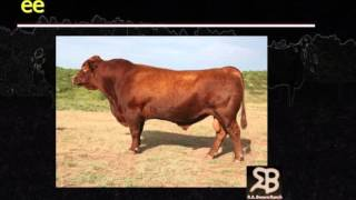 Lecture 5 Part 1- Basic Beef Cattle Genetics