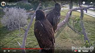 SWFL Eagles * MAYBE E13 OFF ON HIS JOURNEY * Morning Highlights * 4/25/19 FLY HIGH & SAFE!!