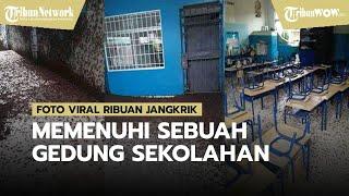 Ribuan Jangkrik Memenuhi Sebuah Gedung Sekolahan, Viral di Media Sosial