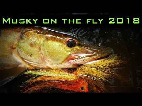 Musky fly fishing 2018!