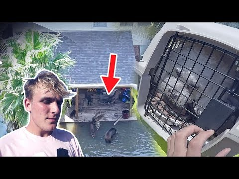 Saving Animals Caught In The Hurricane (emotional..)