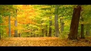 Como  hojas al viento, Los Vasquez